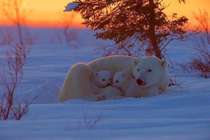 Конкурс фотографий животных от лондонского зоопарка http://chert-poberi.ru/interestnoe/konkurs-fotografij-zhivotnyx-ot-londonskogo-zooparka.html