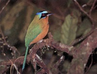 La escasa cobertura vegetal limita la existencia de la fauna; No obstante, entre el bosque del Santuario de Fauna Y Flora se encuentran diversas especies de insectos, aves y batracios; sorprende la presencia de algunas manadas de primates.