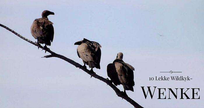 10 Wenke vir Wildkyk