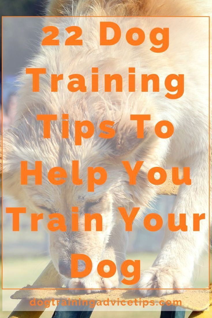 Dog Obedience Training Click The Picture For Many Dog Care And