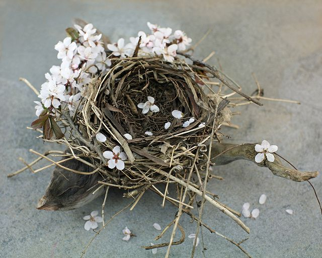 I too have a fascination with birds nests