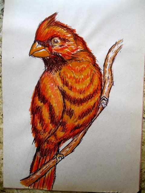 Pen and Watercolor Bird Illustration