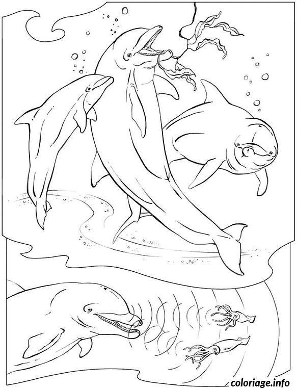 Coloriage daduphins dans la mer Dessin à Imprimer
