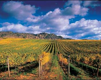 Fave pin of the day:  I live here. Yes I do. Okanagan wine country. #bcwine #wbc12 #canada