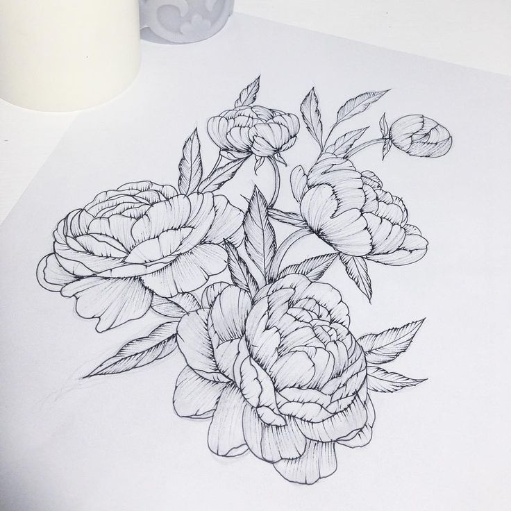 Peony Line Drawing Tattoo : Ideas about peony drawing on pinterest peonies