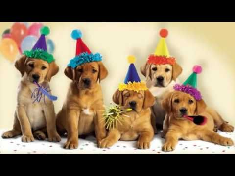 Happy Birthday  Song - Cute Dogs Bark | song's Children - YouTube