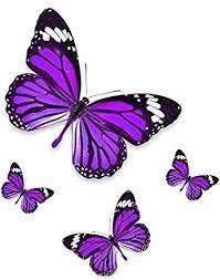 Resultado de imagen para mariposas color violeta