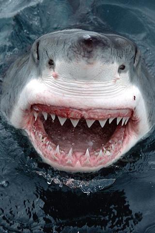 17 Best ideas about Dangerous Fish on Pinterest | Ocean life ...