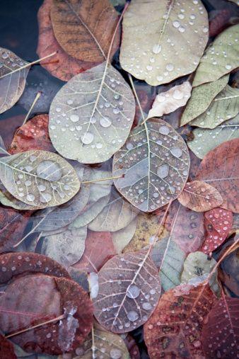 color inspiration: gray purple orange red autumn leaves
