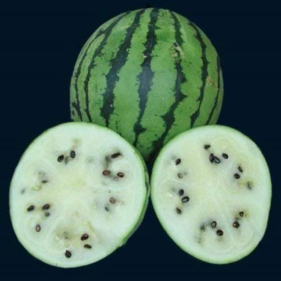 White Wonder Watermelon Heirloom White Fleshed Fruit 5 Rare Seeds Watermelon Healthy Snacks For Kids Rare Seeds
