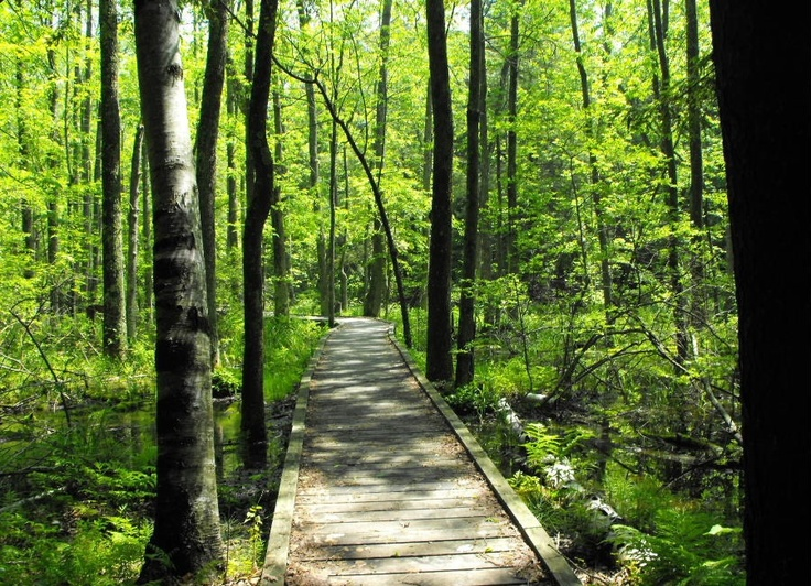 Jobes Woods in Presqu'ile Provincial Park, Brighton, Ontario