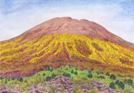 Gorse (Ginestra) on Vesuvius, watercolor by Jana Haasová