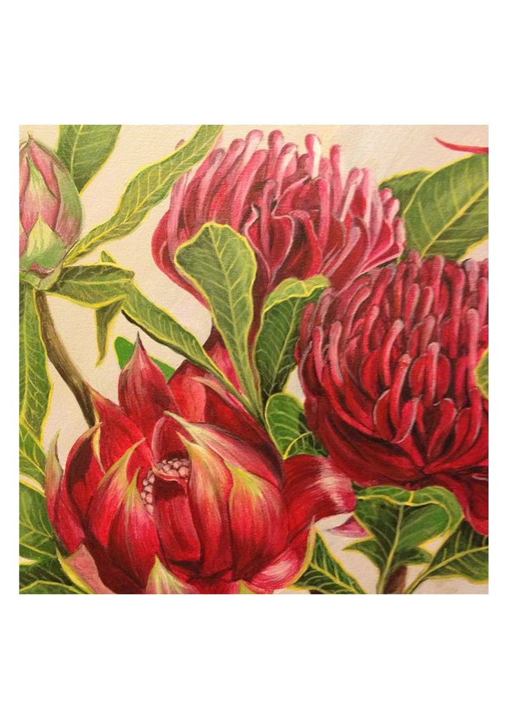 Certified carbon neutral print on A5 art paper (Forest Stewardship Council approved paper). Unlimited edition print signed on reverse side by Felicity Grabkowski. Surrounded by plain white border as per image (image inset).Featuring the iconic flower from New South Wales, the Waratah. Original artwork was acrylic on canvas.
