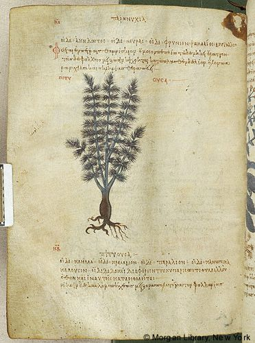De materia medica, MS M.652 fol. 133v - Images from Medieval and Renaissance Manuscripts - The Morgan Library & Museum