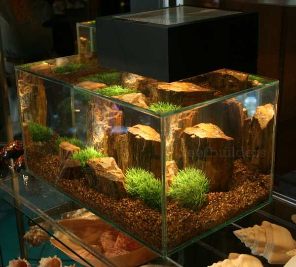 106 best images about fluval edge inspiration on for Fluval edge fish tank