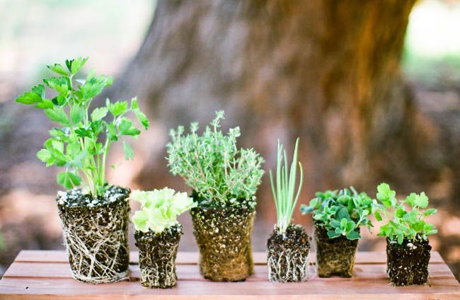 herbs wedding centerpieces pictures | -wedding-flowers-diy-green-herb-centerpiece-ideas-how-to-make-an-herb ...