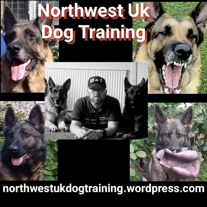 Just Done A Long Night Track Course With A Gsd Called Luger He Did