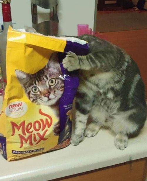 Kumpulan Foto-foto Lucu - Kucing di bungkus makanan?