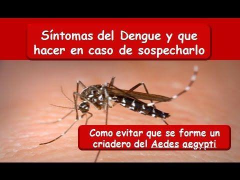 DENGUE: Síntomas y prevención del Dengue