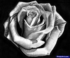 How to Draw a Rose In Pencil, Draw a Realistic Rose, Step by Step, Flowers, Pop…