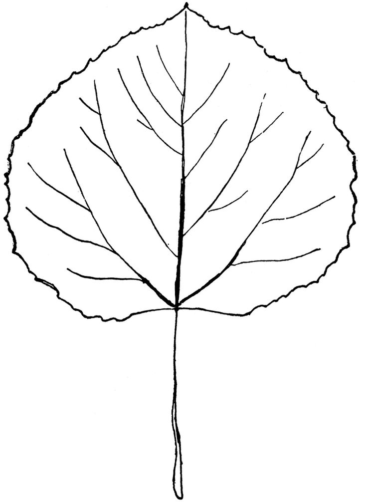 Aspen leaf. My next tattoo in some shape or form. But where to put it???