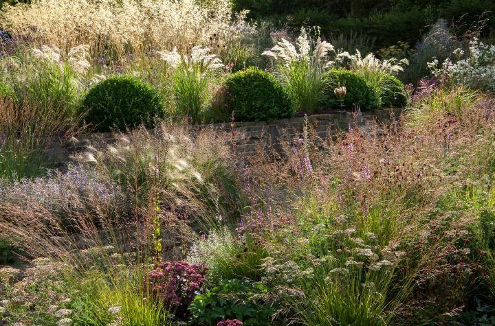 garden Perennial plants, Herbaceous perennials, Plants