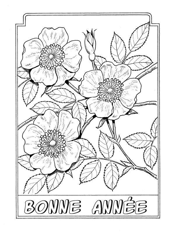 Coloriage Adulte Bonne Annee Inspiration Flower