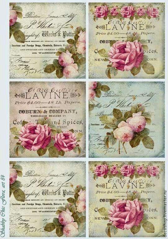 Roses.   Pretty