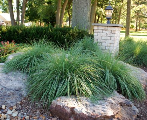 Tired of lawn care? Reduce grass