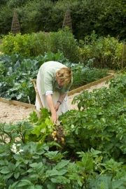 Starting a vegetable garden from scratch | Sarah Raven's Kitchen and Garden