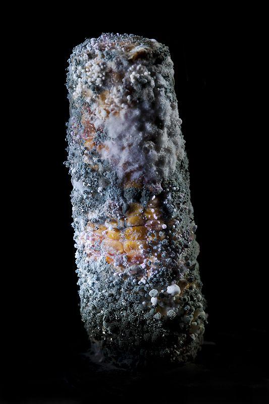 mold fungus by Heikki Leis