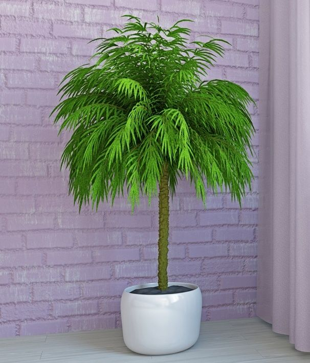 11 Best House Plants For A Child S Room Images On 640 x 480
