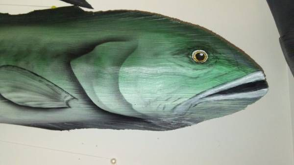 """The"""" largemouth bass"""" is a freshwater gamefish in the sunfish family, a species of """"black bass"""" native to North America.  Palm Frond Art Fish created by Dale Werner from the frond husk of a Royal Palm Tree. Approx. 27″ x 9″  Call 239-200-9090 For details, questions and to purchase."""