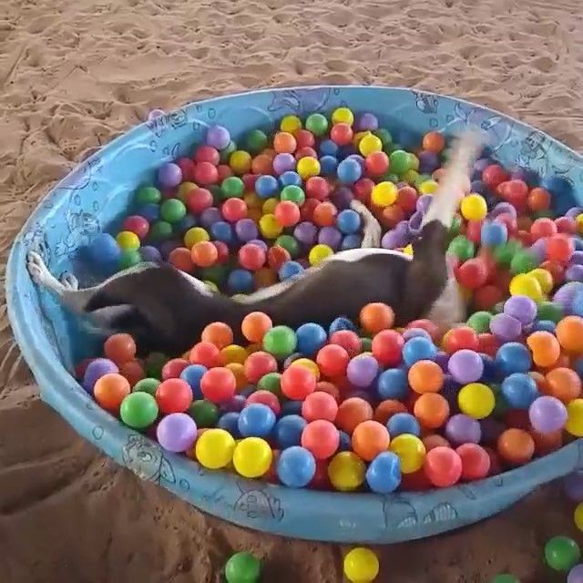 This dog and I think alike. I love that @bestfriendsanimalsociety genuinely cares to help their animals find adoptive families ❤️ ...video shared by @suzie00712 :) #AdoptDontShop or #Foster