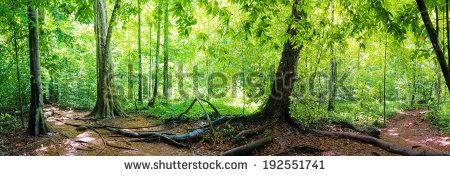 Panorama of a path through Blue Pool in rainforest, Emerald Pool - Krabi - Thailand - stock photo