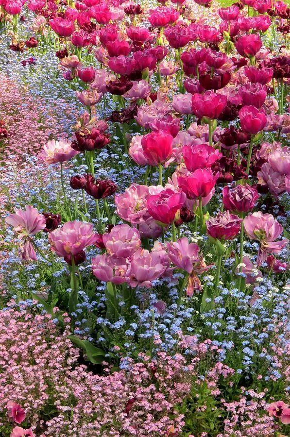 lavender-colored glasses... : Photo