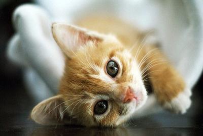 awe so cute!!!