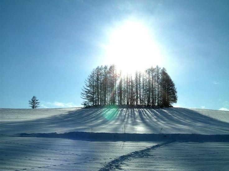 Furano beautiful snow scene