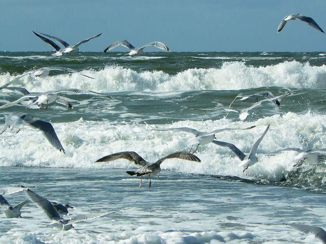 Meer, Strand, Wellen, Nordsee - Kostenloses Bild auf Pixabay
