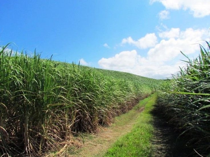 A beautiful lush sugar cane farm on the south coast, with amazing sea views. The main house is double storey. Downstairs