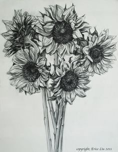 sunflower drawing tumblr - Buscar con Google