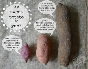 difference between sweet potatoes and yams 17 best images about yams versus sweet potatoes on 12952