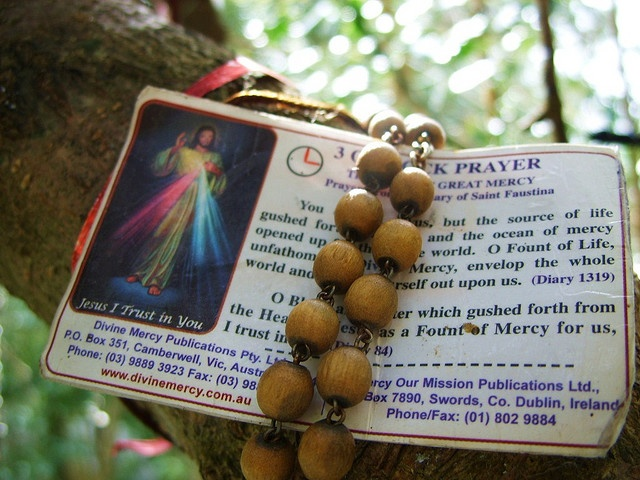 """""""The 3 O'Clock Prayer fixed to a tree with a Rosary -- You expired, O Jesus,  but the source of life gushed forth for souls and an ocean of mercy opened up for the whole world. O Fount of Life, unfathomable Divine Mercy, envelop the whole world and empty Yourself out upon us. O Blood and Water, which gushed forth from the Heart of Jesus as a fount of mercy for us, I trust in You. Amen."""""""