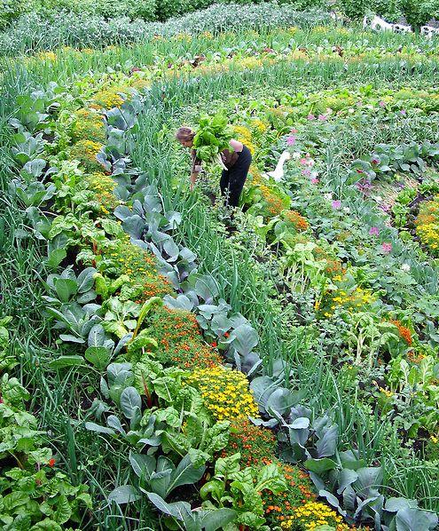 10 Creative Vegetable Garden Ideas: 5 Creative Vegetable Garden Ideas