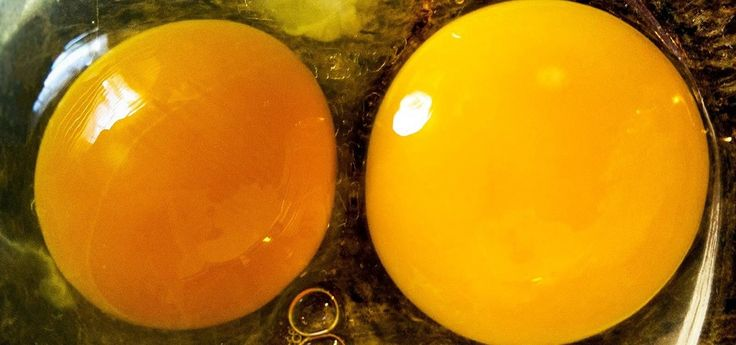 """How to Tell if Your """"Expired"""" Eggs Are Still Good to Eat « Food Hacks"""