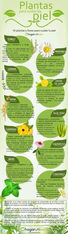 Infografía: plantas para cuidar la piel de hogarutil.com