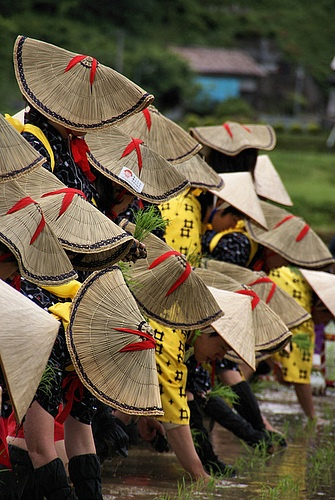 Japan: Maidens planting rice - traditional Shinto rice planting ceremony in honor of the gods of the rice fields.