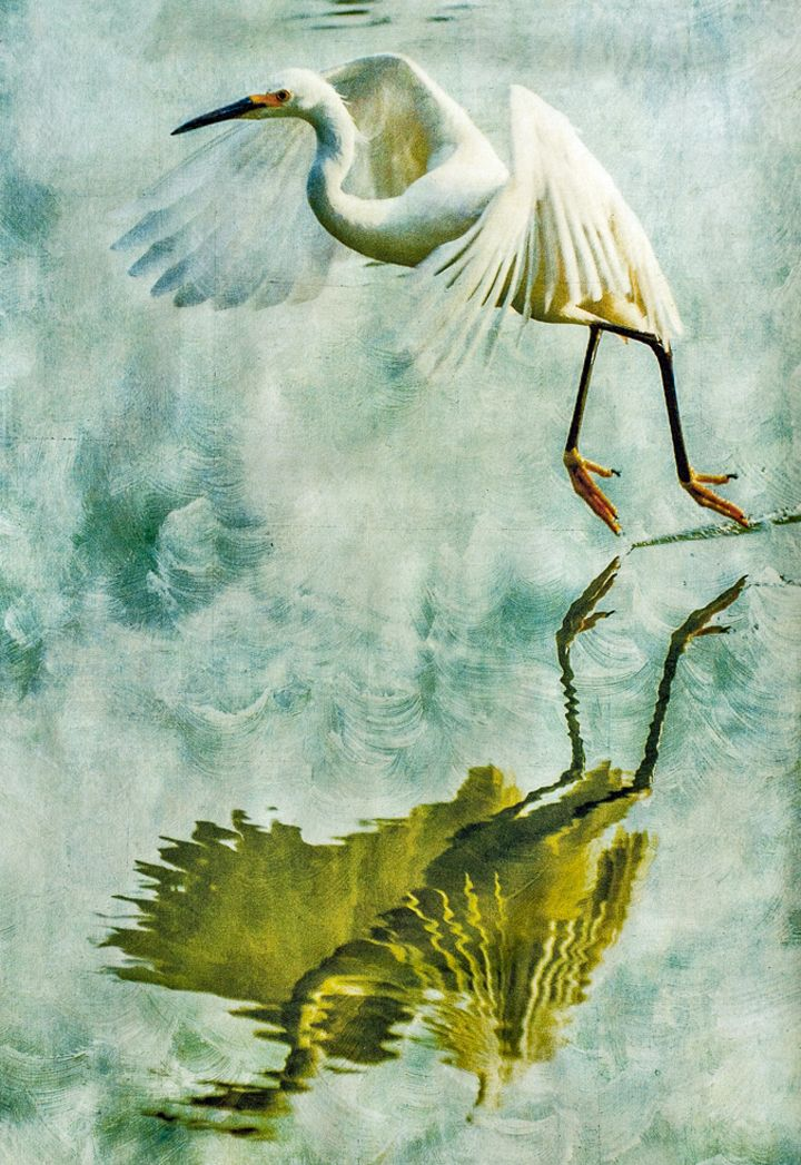 "9th Place – Overall – Nature 2015 Online Art Exhibition - Wendi Schneider – ""Egret, Reflected"" - Artist's Website: www.wendischneider.com - To View the Entire Art Exhibition: https://www.lightspacetime.com/nature-2015-art-exhibition-overall-category/"