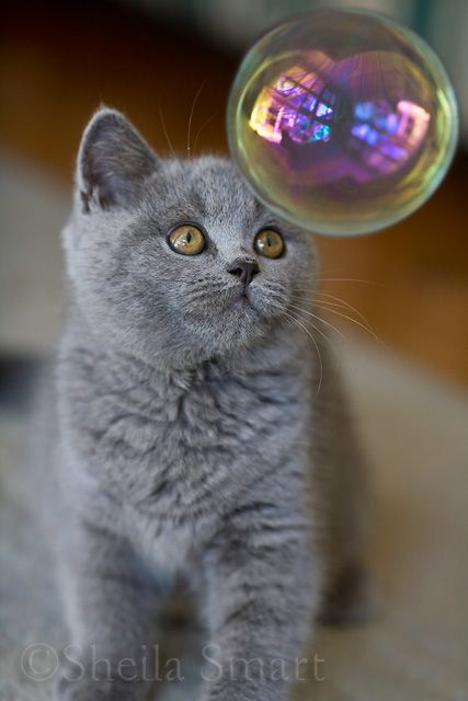 gray kitten & the bubble
