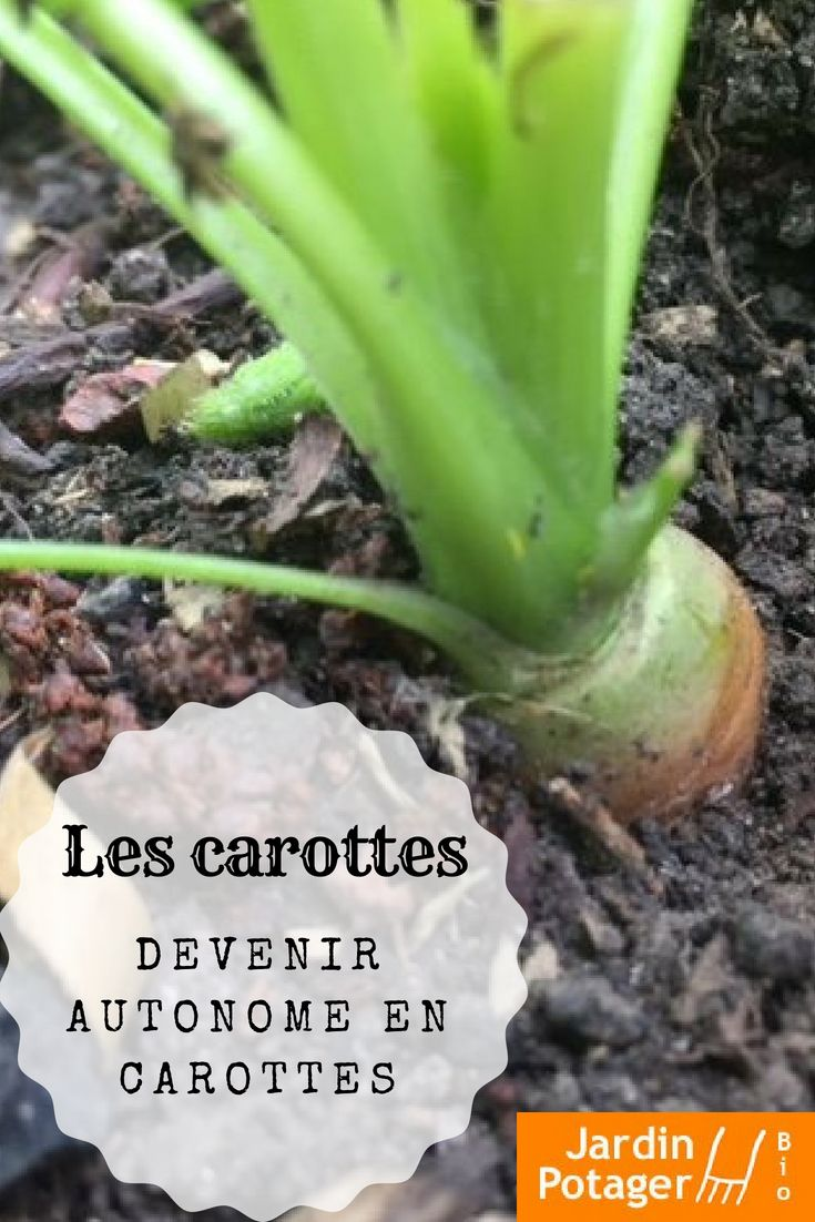 Comment cultiver des carottes ? | Jardinage potager, Astuce jardin et Cultiver